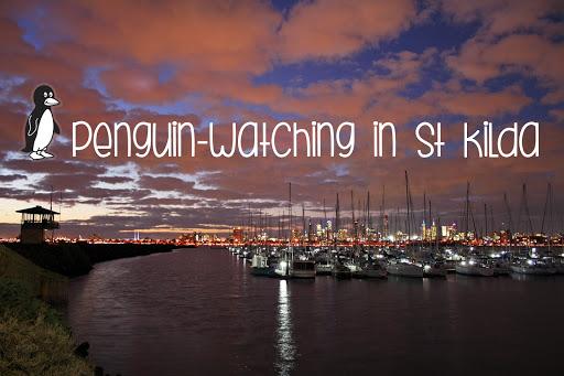 Melbourne Wildlife: St Kilda Penguins