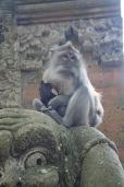 Protective Monkey Mama