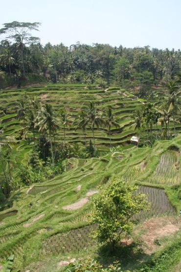 Riceterracce Ubud