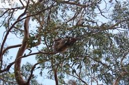 mama and kid koala