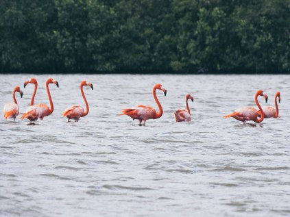 Flamingos at Guanaroca Lagoon